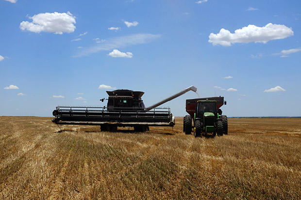 Workers harvesting wheat on a farm near Altus, Okla., in June 2015.