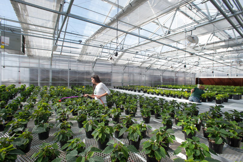Students at Colorado State University care for plants in a greenhouse on campus in Fort Collins, Colorado.