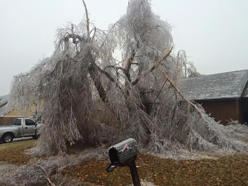 Damage to a tree in Yukon following last week's ice storm.