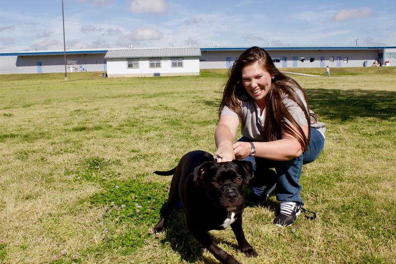 Cassie Cramer works with 8-month-old Mastiff mix Kingston on April 15, 2016