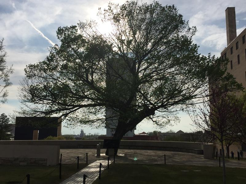 Survivor Tree, Oklahoma City National Memorial and Museum