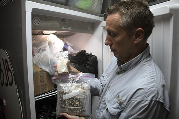 Biologist and Cherokee Nation Administrative Liaison Pat Gwin removes white eagle corn seeds from the seed bank freezer at Cherokee Nation headquarters in Tahlequah, Oklahoma.