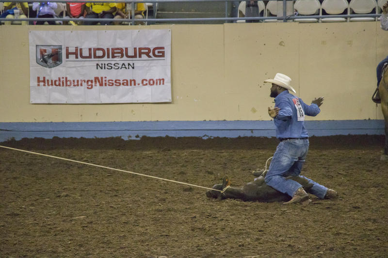 A rider throws up his hands to show he is finished during the timed calf roping competition.