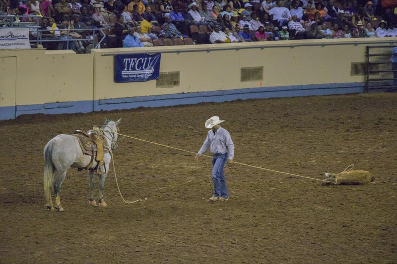 A rider walks back to his horse after he finishes roping a calf.