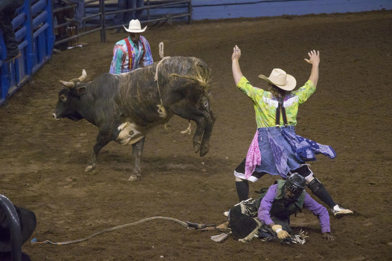 Rodeo clowns distract a bull after a rider falls off.  Riders must stay on the bull for eight seconds in order to receive a score.