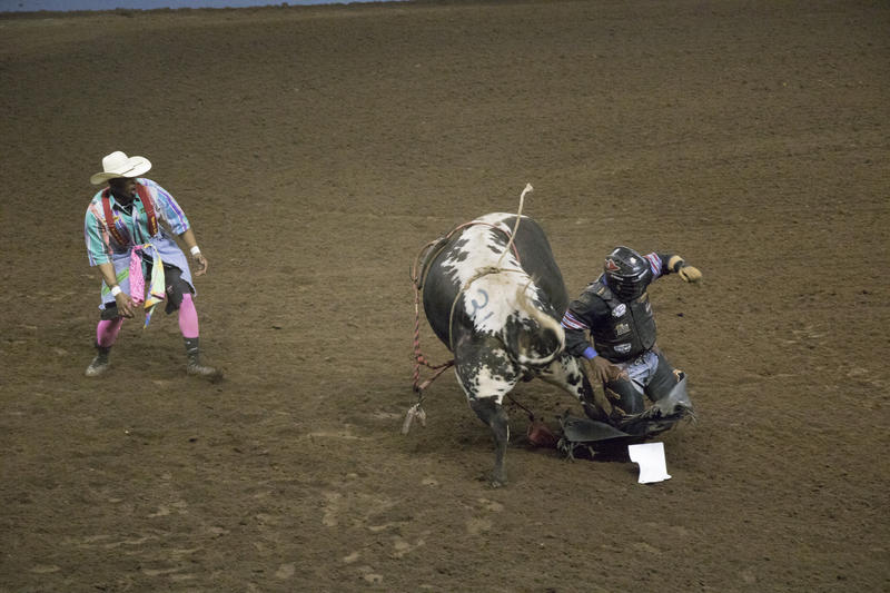 A rodeo clown watches as a rider tries to dodge a bull.