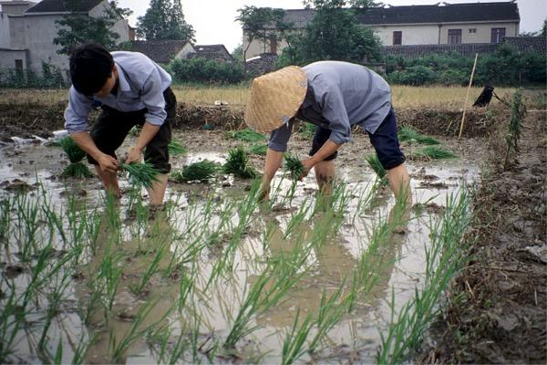 Erle Ellis investigated nitrogen cycling across an entire village in China under pre-industrial, nitrogen-limiting conditions relative to the nitrogen-saturated conditions of 1994 to assess the role of nitrogen cycling in sustainable agricultural management.