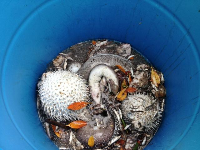 Hawaii Department of Health officials say more than 2,000 dead fish and marine life have been collected from waters around Honolulu Harbor