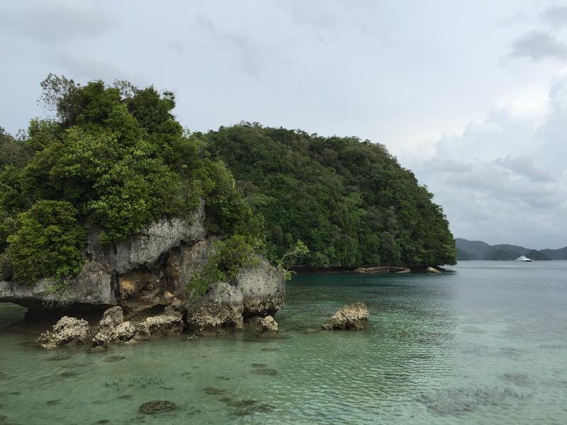Palau's Rock Islands, called Chelbacheb, are made of limestone.  The muffin shape of many of them is caused by erosion, in large part by the sponges, bi-valves, snails, and others that graze near the water's edge.