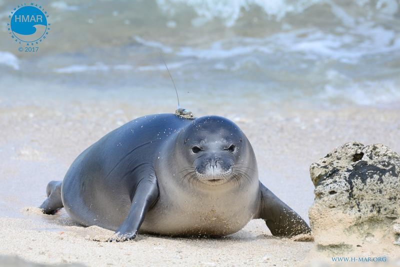 Hawaii Marine Animal Response