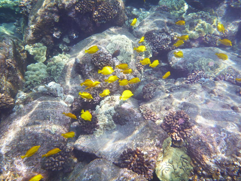 Bill to Ban Aquarium Fishing Heard by Senate Committee