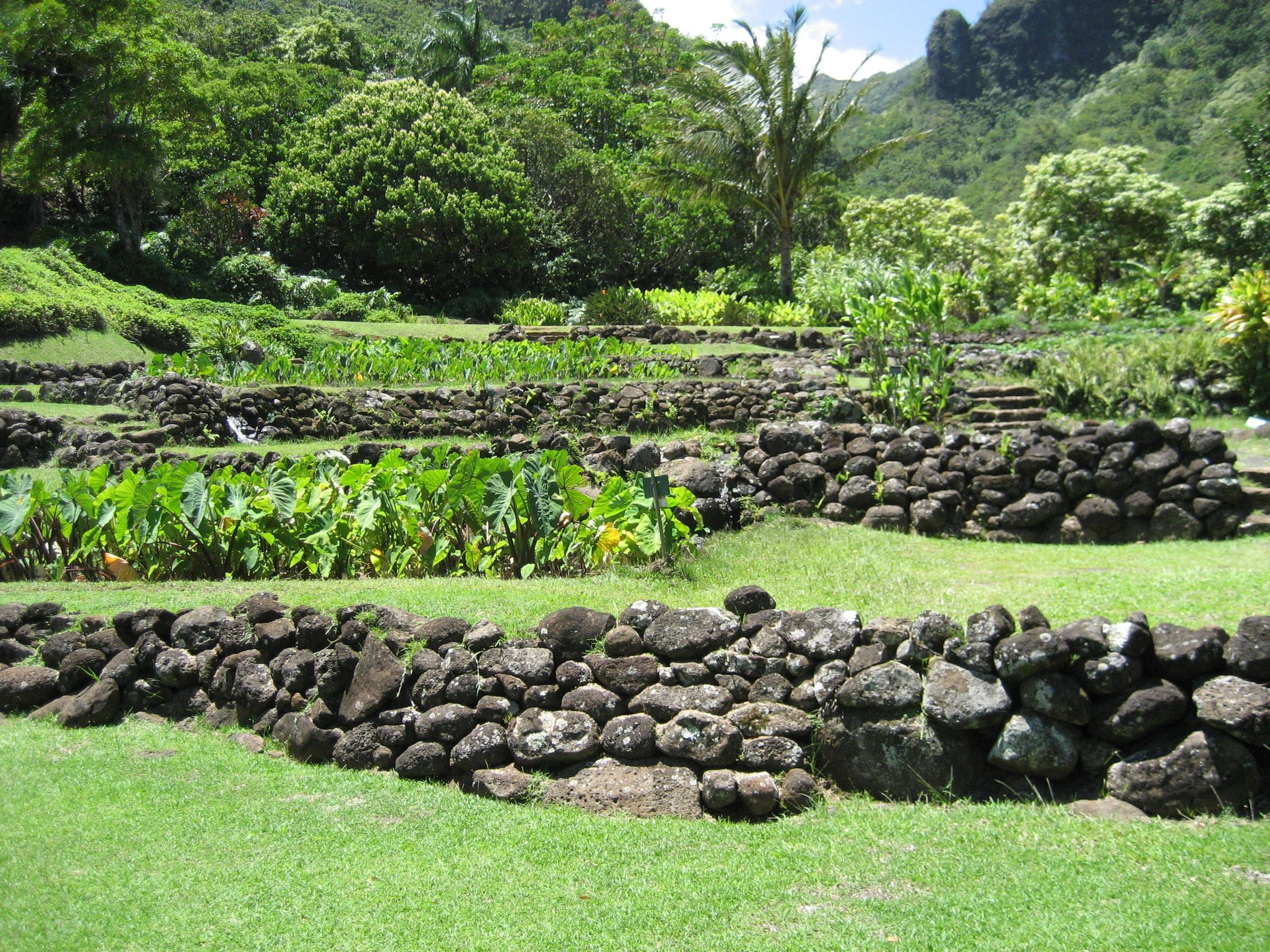 The conversation thursday november 3rd 2016 hawaii for Terrace farming meaning