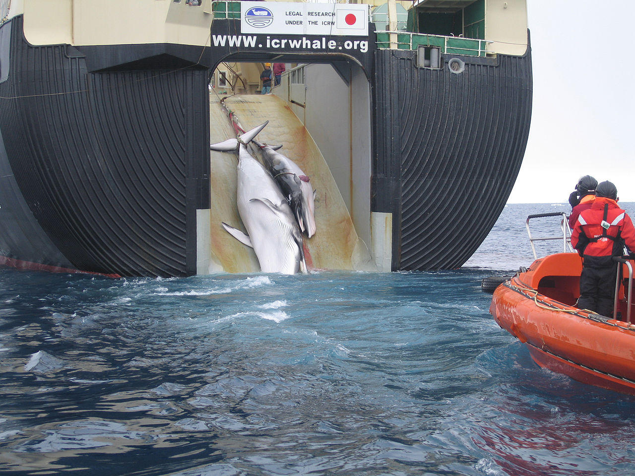 Greenpeace condemns Japan's announcement to resume commercial whaling