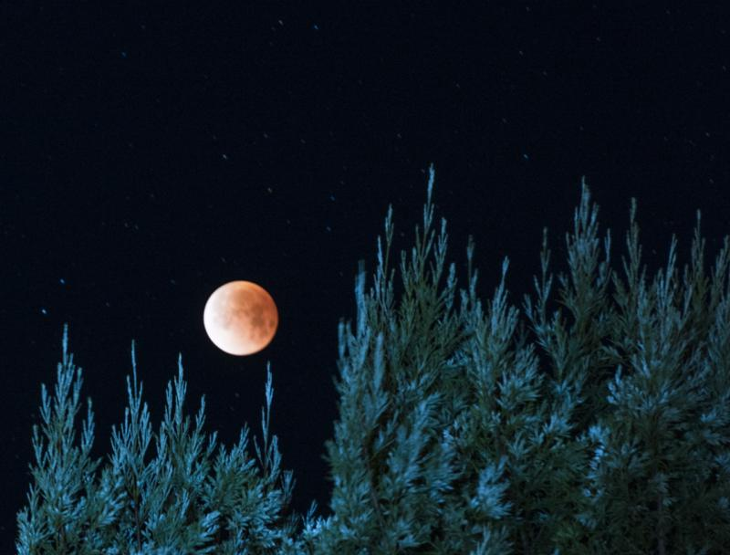 The moon as seen from Arcata, CA the morning of January 31st