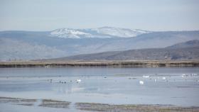 Wildlife refuge in the Lower Klamath basin.