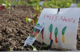 There are about 500 vegetable gardens planted at Oregon schools, and the state's first School Garden Summit takes place on Mon., Jan. 13 near Salem.