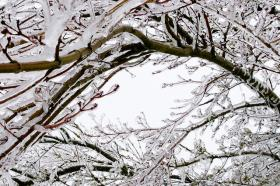 Ice coats tree during early-February winter storm.