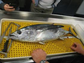 Albacore tuna caught off Oregon Coast to check for radiation from Fukushima.