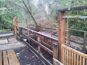 Fish trap on Munsel Creek where STEP volunteers waylay spawning coho.