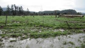 Allowing the Necanicum River to flood this pasture kept Highway 101 dry this winter.