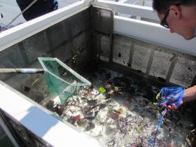 The fish collection box catches a lot of debris as well as a variety of fish.