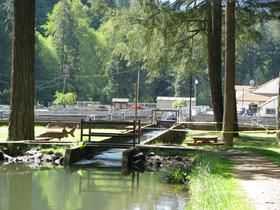 The show pond at the Leaburg Hatchery on the McKenzie River is a popular spot for tourists, especially in the summer.