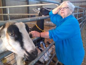 Shari Reyna with some of her goats in the barn.