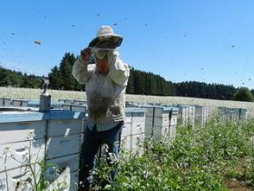 Beekeeper George Hansen pulls on a protective suit.