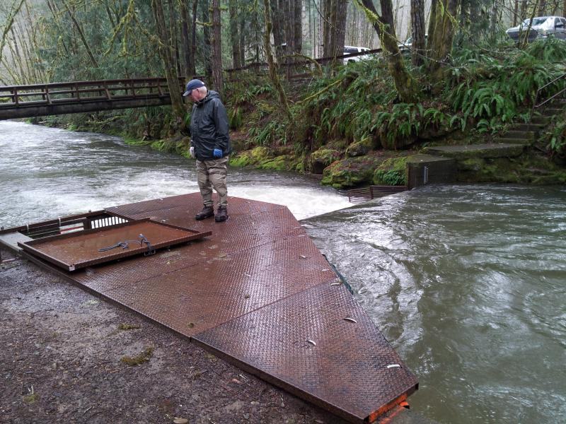 Florence STEP volunteer at Whiteaker Creek fish trap