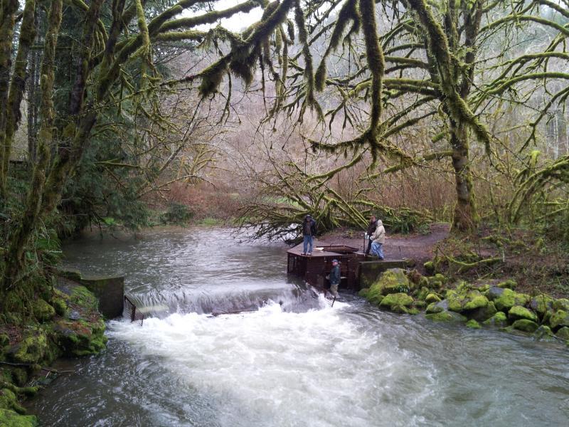 Whiteaker Creek runs swolen and muddy.