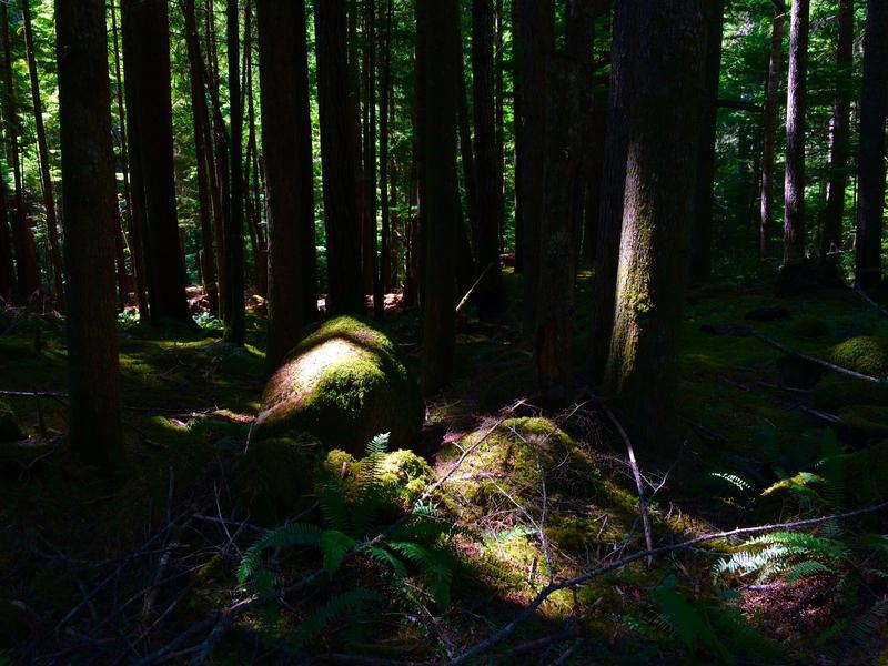 Does Bigfoot reside in the dark forests of the Pacific Northwest? Or just in the corners of our imagination?