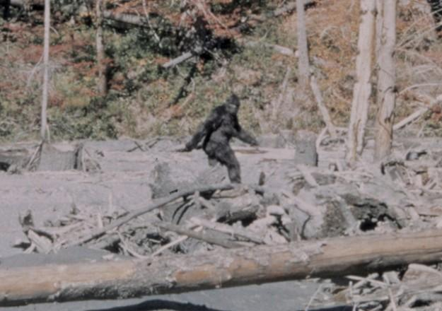 Still from 1967 Patterson-Gimlin film, purportedly showing a bonafide Sasquatch.