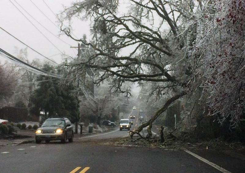 A branch -- weiged down by ice -- blocks part of Willamette Street.