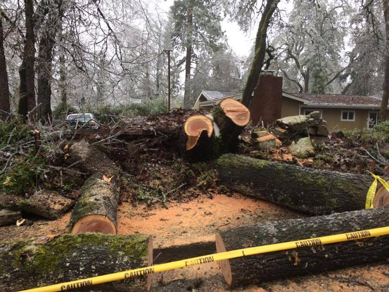 Sawed-up logs in Eugene.