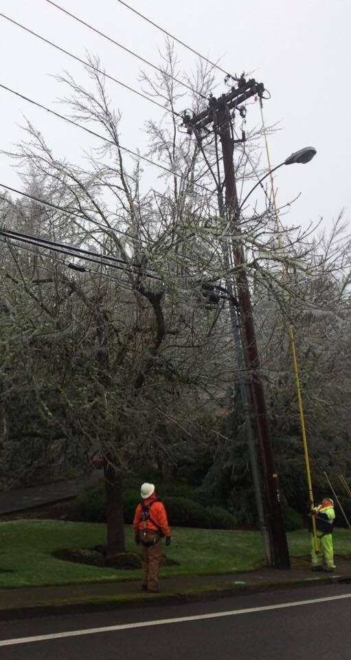 Utility crews work to clear branches from vulnerable lines and transformers.