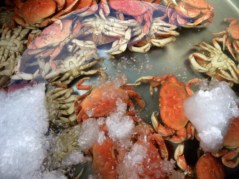 Dungeness crabs turn orange during the cooking process.  Here they sit in a tank of 34-degree F water.