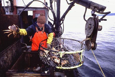 A crab fisherman works a winch and cage.