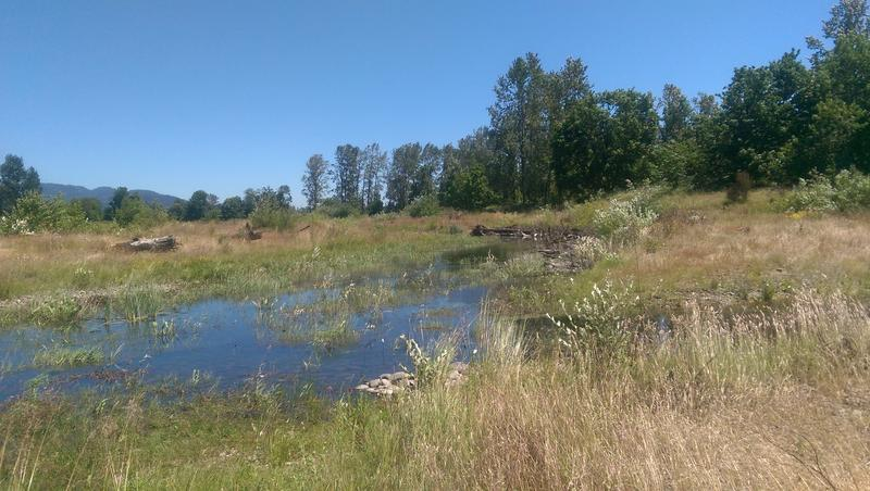 Former gravel ponds have been restored so they form habitat for fish and wildlife.