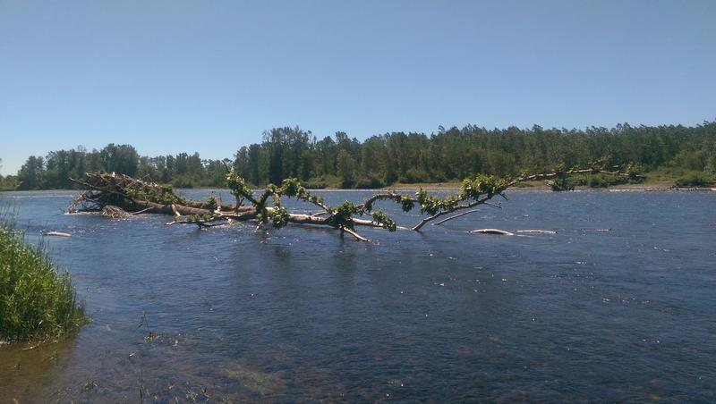 The Willamette River at Green Island.