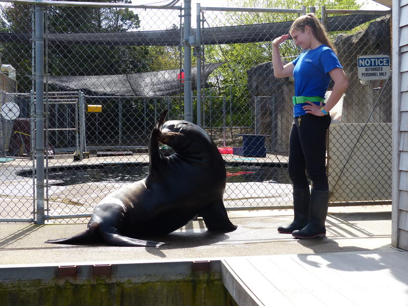 Max, the Sea Lion, salutes