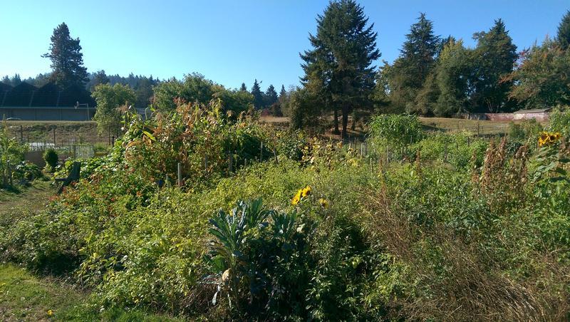 Churchill Community Garden in Eugene.