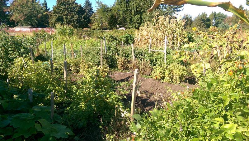 The Churchill Community Garden in Eugene