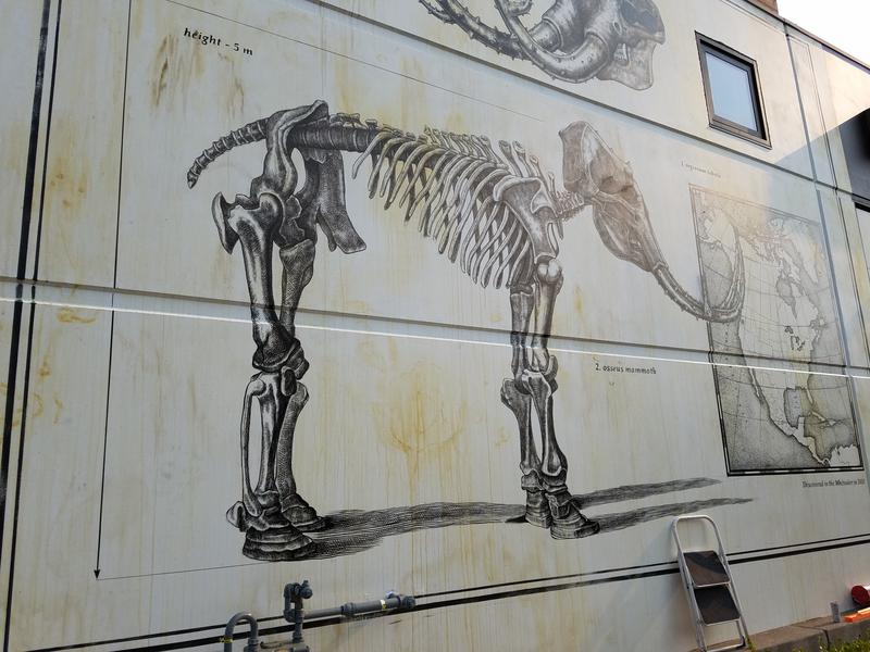 "The left side of the mural features the mammoth's skeleton, complete with a map of the united states and the caption ""Discovered in the Whiteaker in 2018."" Diaz likes to invent new animals from a base element."