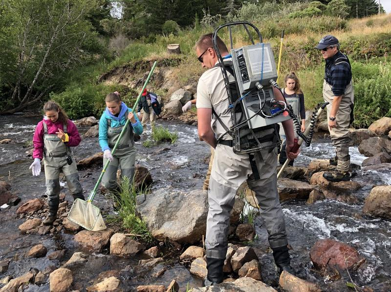 So far this year, nearly 30 Pacific Lamprey have been caught and tagged by conservation and tribal groups in southwestern Oregon..