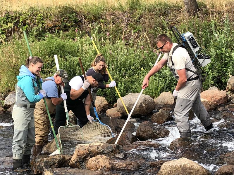 Gary Vonderohe (right) of the Oregon Dept of Fish & Wildlife, prods a lamprey with an electro-shocker. A team of volunteers with nets prepare to catch it.