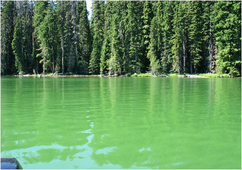 Algae alert issued for Odell Lake, popular summer spot in the Cascades