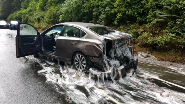 Slime Eels Cause Multiple Car Pileup On Oregon Highway