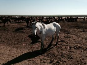 Horses have been moved from ranches in the Flint Hills to a feed lot in Scott City