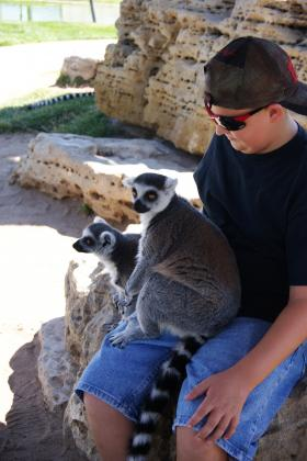 Lemurs sit on the lap of a visitor at Tanganyika.