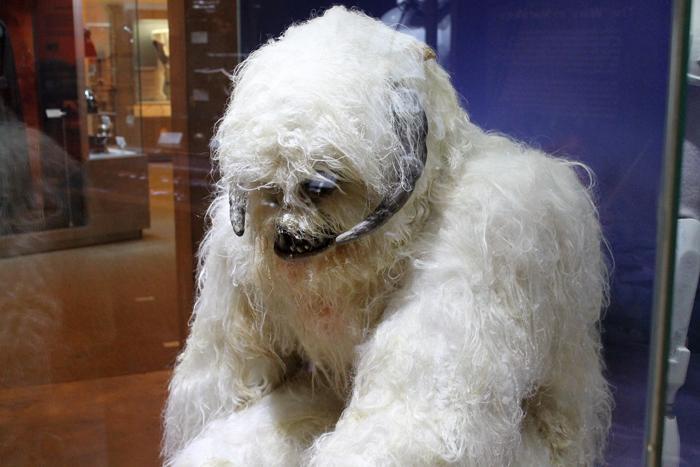 A Wampa ice creature.